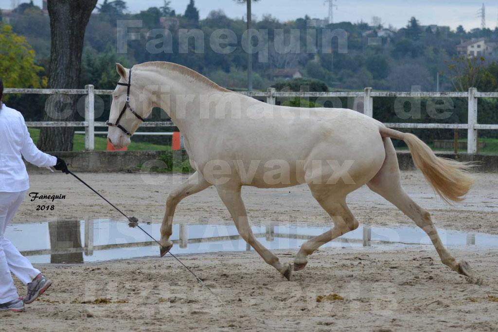 Confirmation de chevaux LUSITANIENS aux Haras d'UZES Novembre 2018 - LOLIBLOU - 03