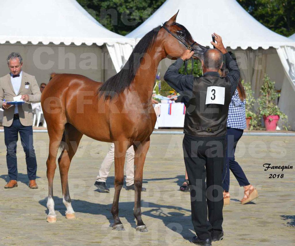 Championnat de FRANCE des chevaux Arabes à Pompadour en 2018 - SH CHARISMA - Notre Sélection - 06