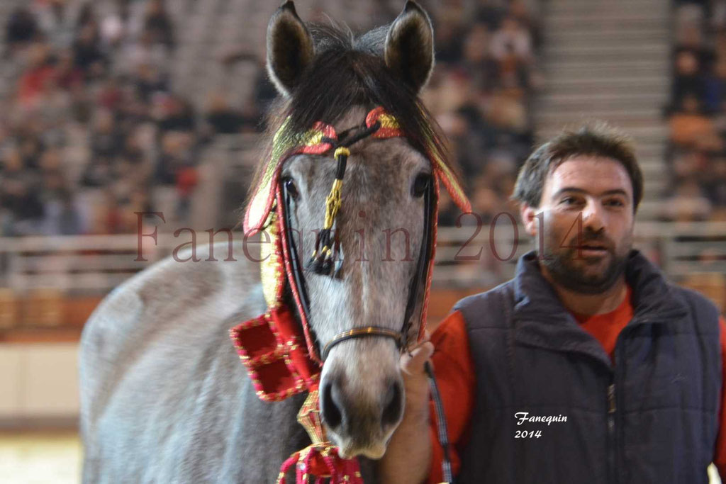 Show des races - Chevaux BARBE 30