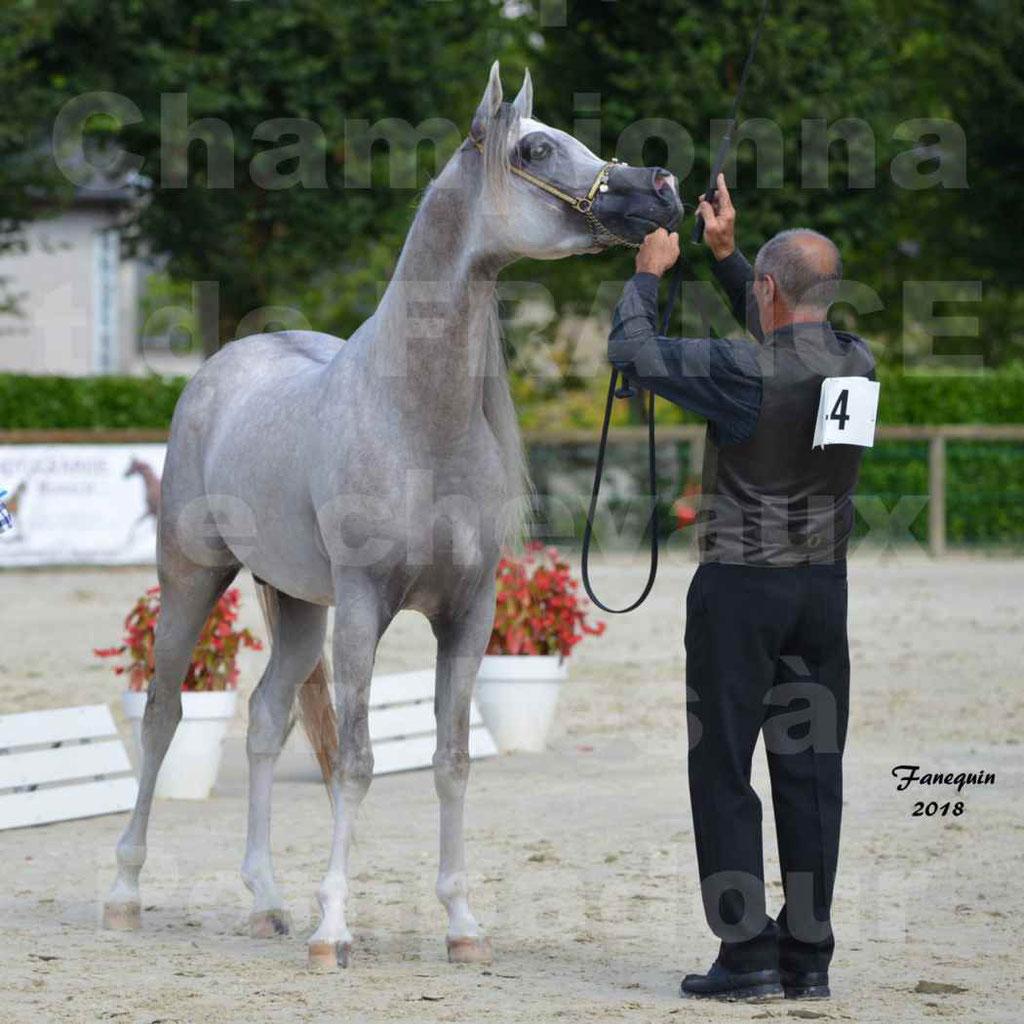 Championnat de FRANCE de chevaux Arabes à Pompadour en 2018 - SH CHAGALL - Notre Sélection - 13