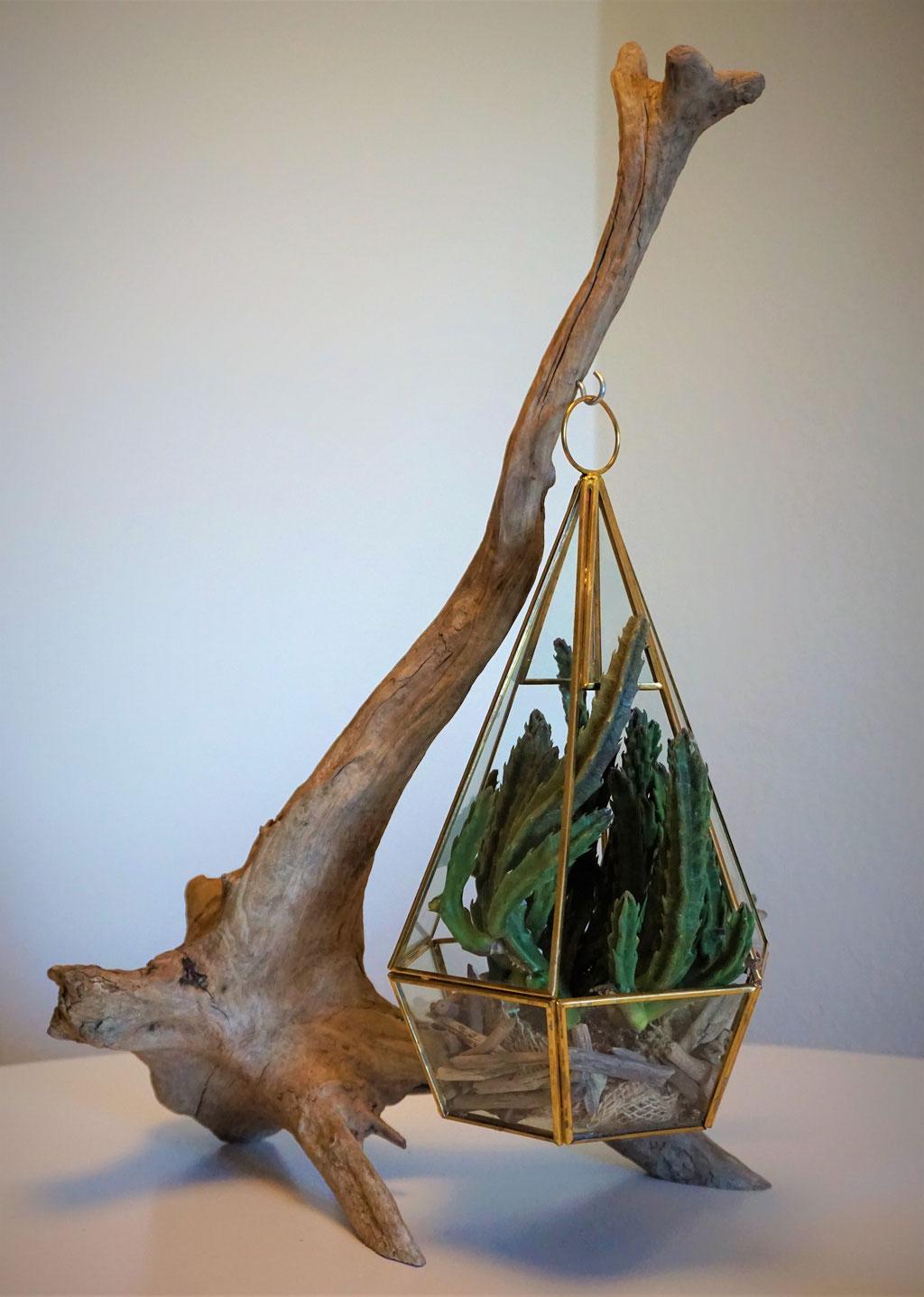 Pflanzenampel Preis: 45€