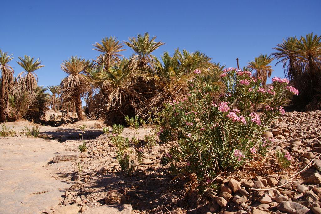 Réservation trek Mélodie du désert