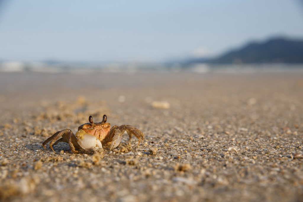 Mr Crabs