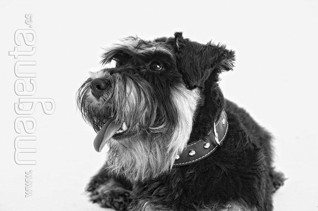 Foto book Mascotas, Una foto con tu mascota