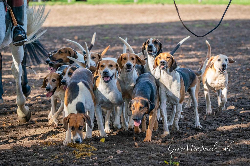 Schleppjagd Jagdfotos vom Team @Givemeasmile.de auf der Fotojagd, Peter Jäger   #givemeasmilede Schleppjagd 2019 Herzebrock