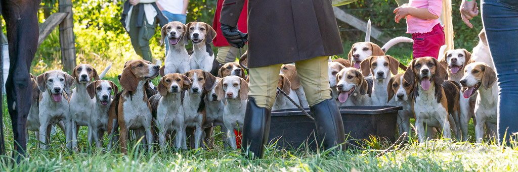 Jagdfotos vom Team @Givemeasmile.de auf der Fotojagd, Peter Jäger   #givemeasmilede #GronerSchleppjagd #beaglemeutemuensterland #beaglemeute