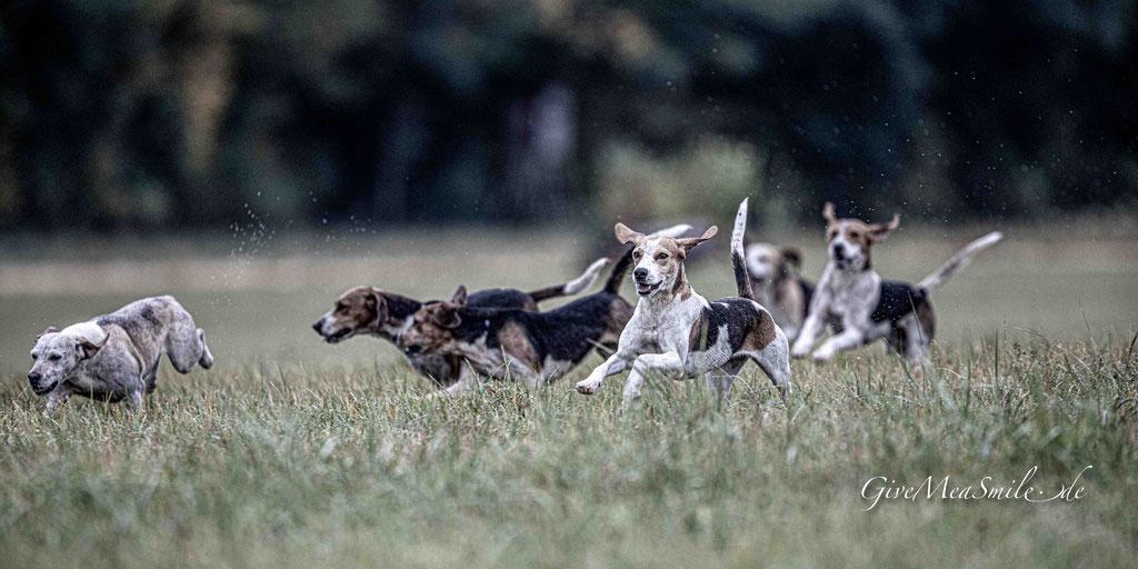 Jagdfotos vom Team @Givemeasmile.de auf der Fotojagd, Peter Jäger   #givemeasmilede #vogelsbergmeute #beaglemeute #beagles #jagdreiten #schleppjagd