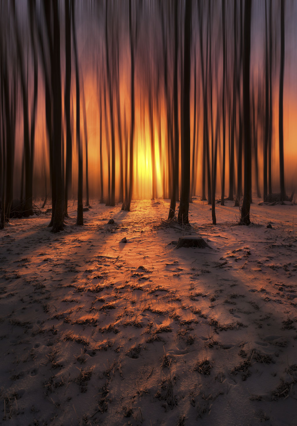 Forêt - Col Bayard - (Hautes Alpes-France) © Arzur Michaël
