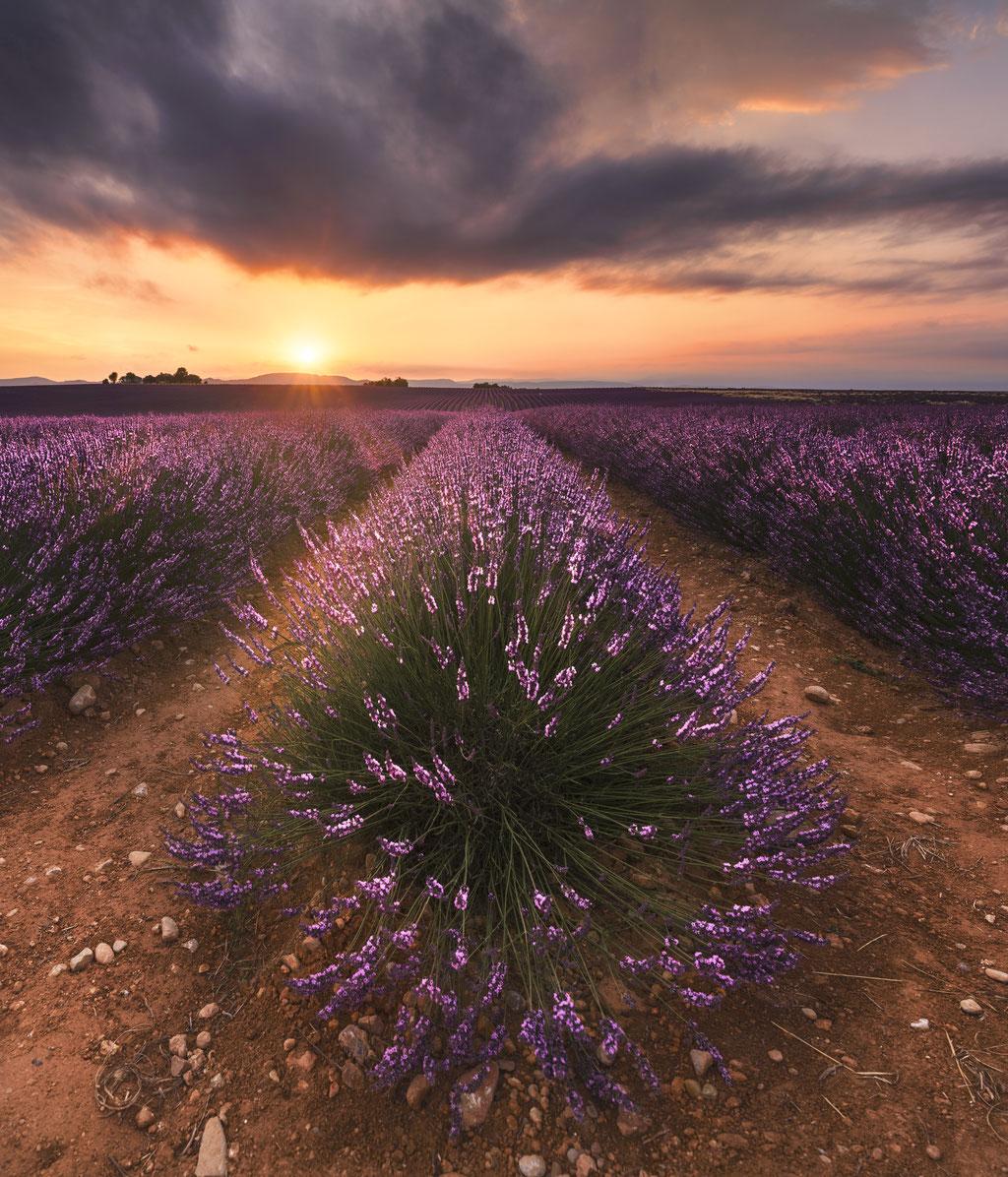 Plateau de Valensole  (Alpes de Haute provence-France) © Arzur Michaël