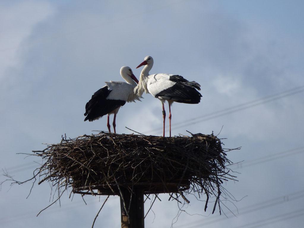 10. März: Achtung am Hachborner Nest! - Foto: Miriam Wagner