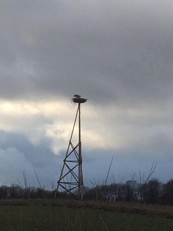 13.03.2019: Weißstorch auf dem Nest in Erbenhausen - Foto: Ludolf Hoffmann