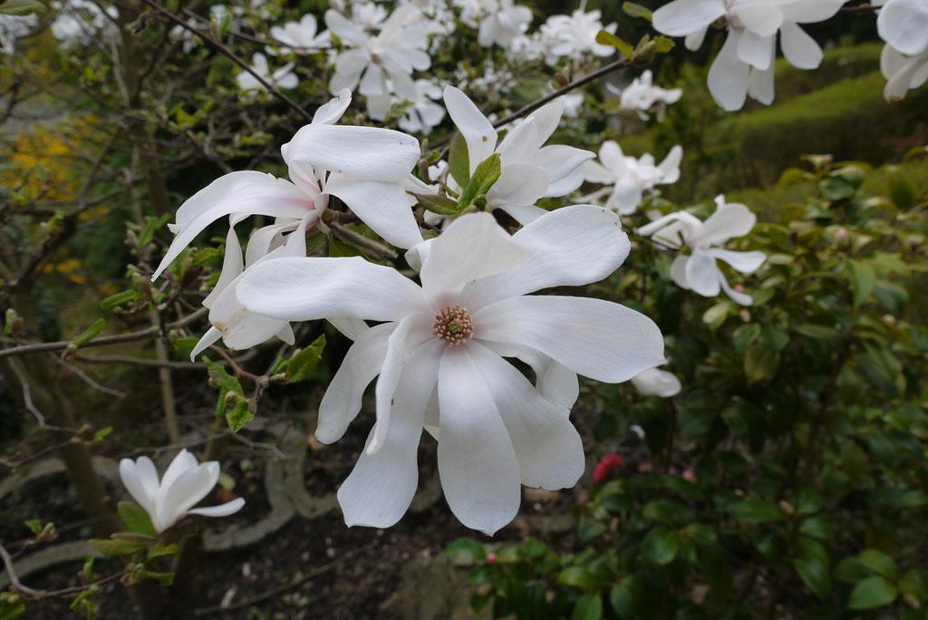 Bodensee Insel Mainau Frühlingserwachen