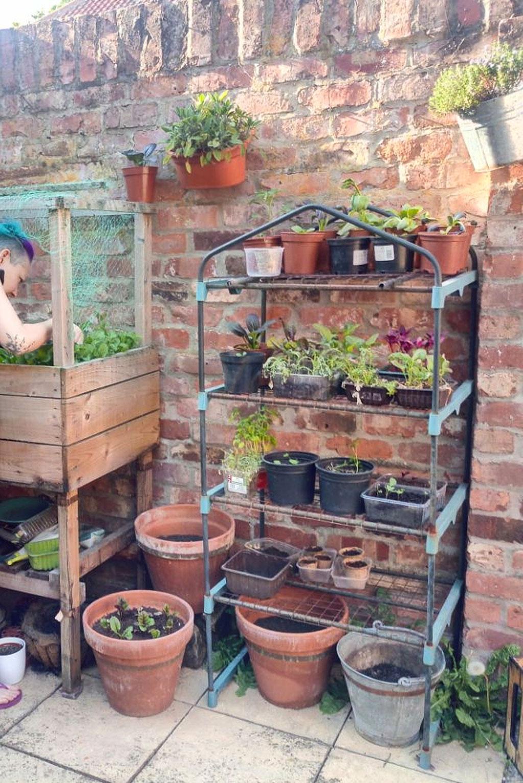 What and how I've been doing - backyard gardening - Zebraspider DIY Anti-Fashion Blog