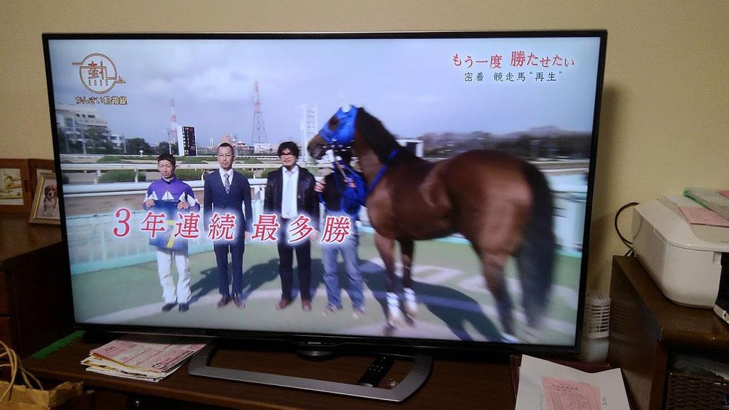 勝った馬の表彰式はファンにとっても喜び