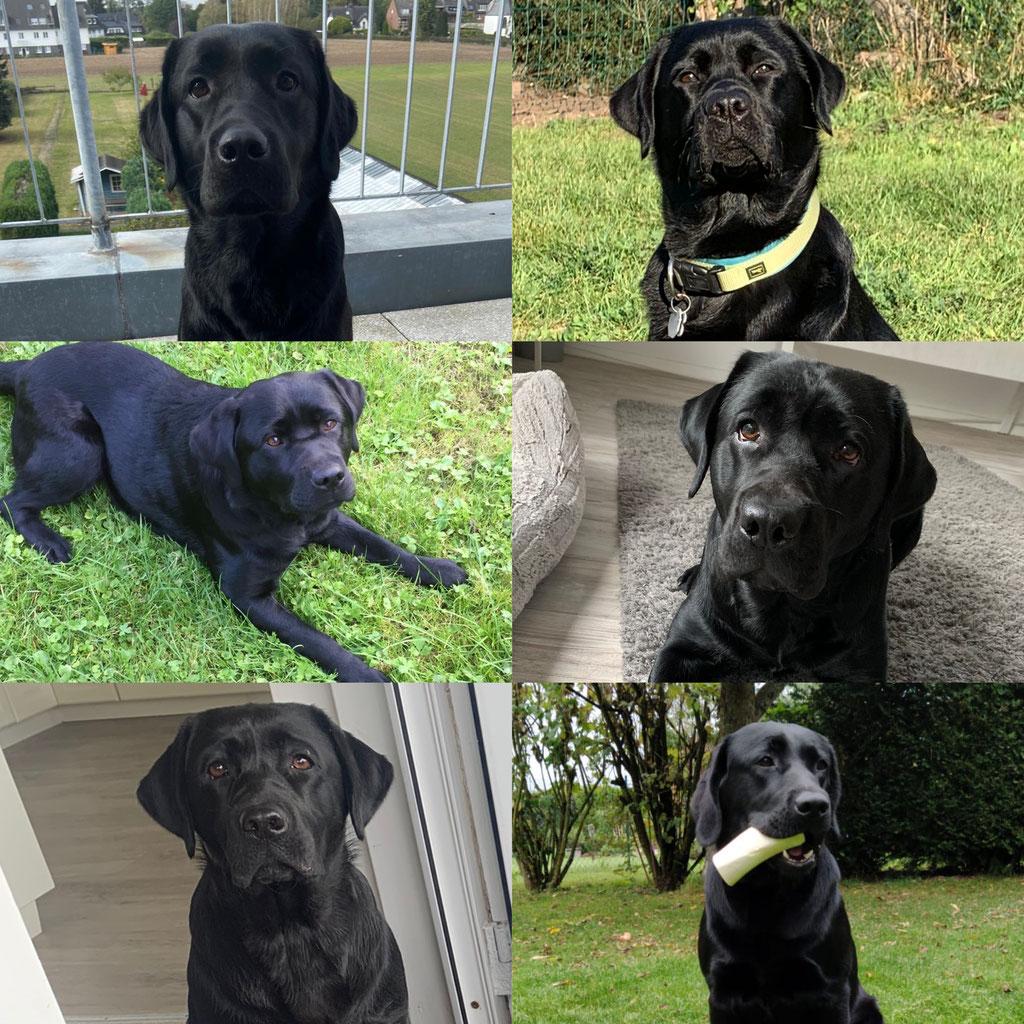 Die Hündinnen mit einem Jahr (oben: Emma & Zelda, Mitte: Lotta & Juno, unten: Jolle & Trudie jr.)