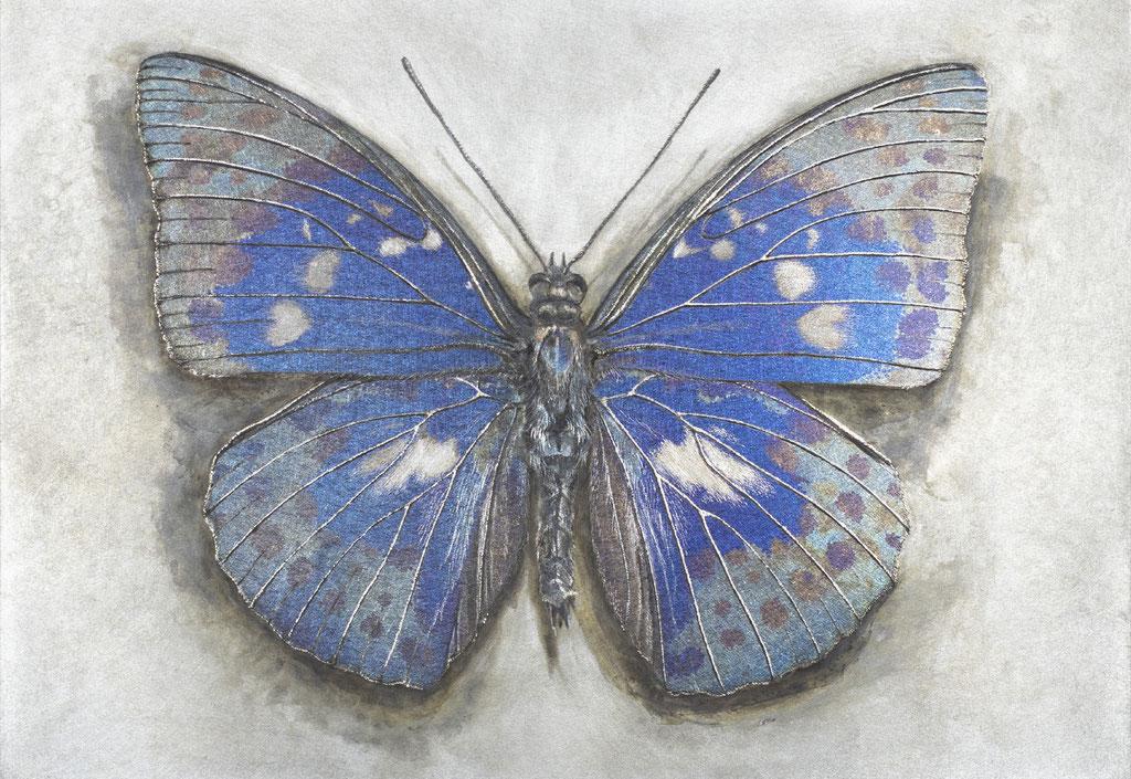 ポストカード-7 碧羅の蝶  ¥330 - (税込)     H100×W148 mm