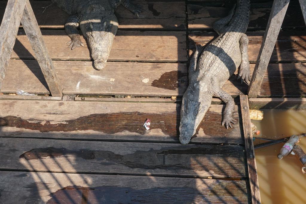"""Krokodilsfarm"""
