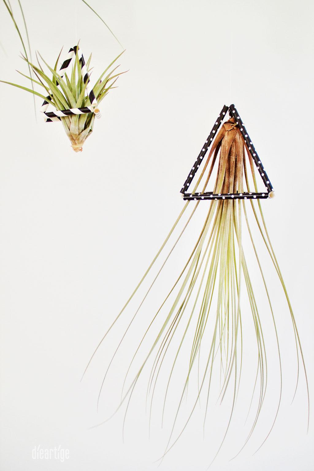 dieartigeBLOG - DIY / Tillandsien im modernen Quallenlook