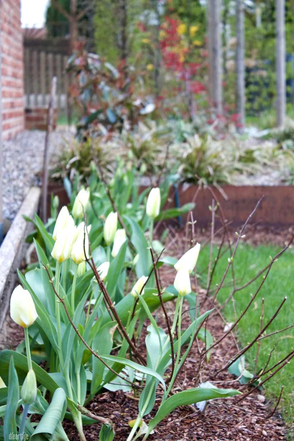 dieartigeGARTEN - Weiße Tulpen + Hortensien
