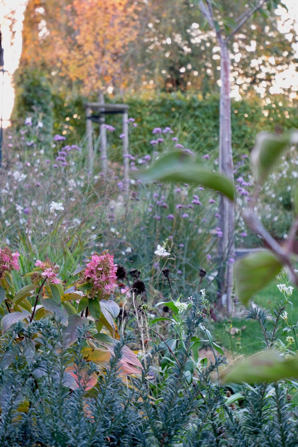 dieartigeGARTEN - Oktobergarten | an den Rispenhortensien vorbei, Im Hintergrund Eisenkraut