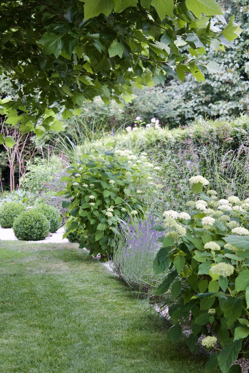 dieartigeGARTEN - Sommergarten mit Buchs, Ballhortensien, Lavendel, Gräsern