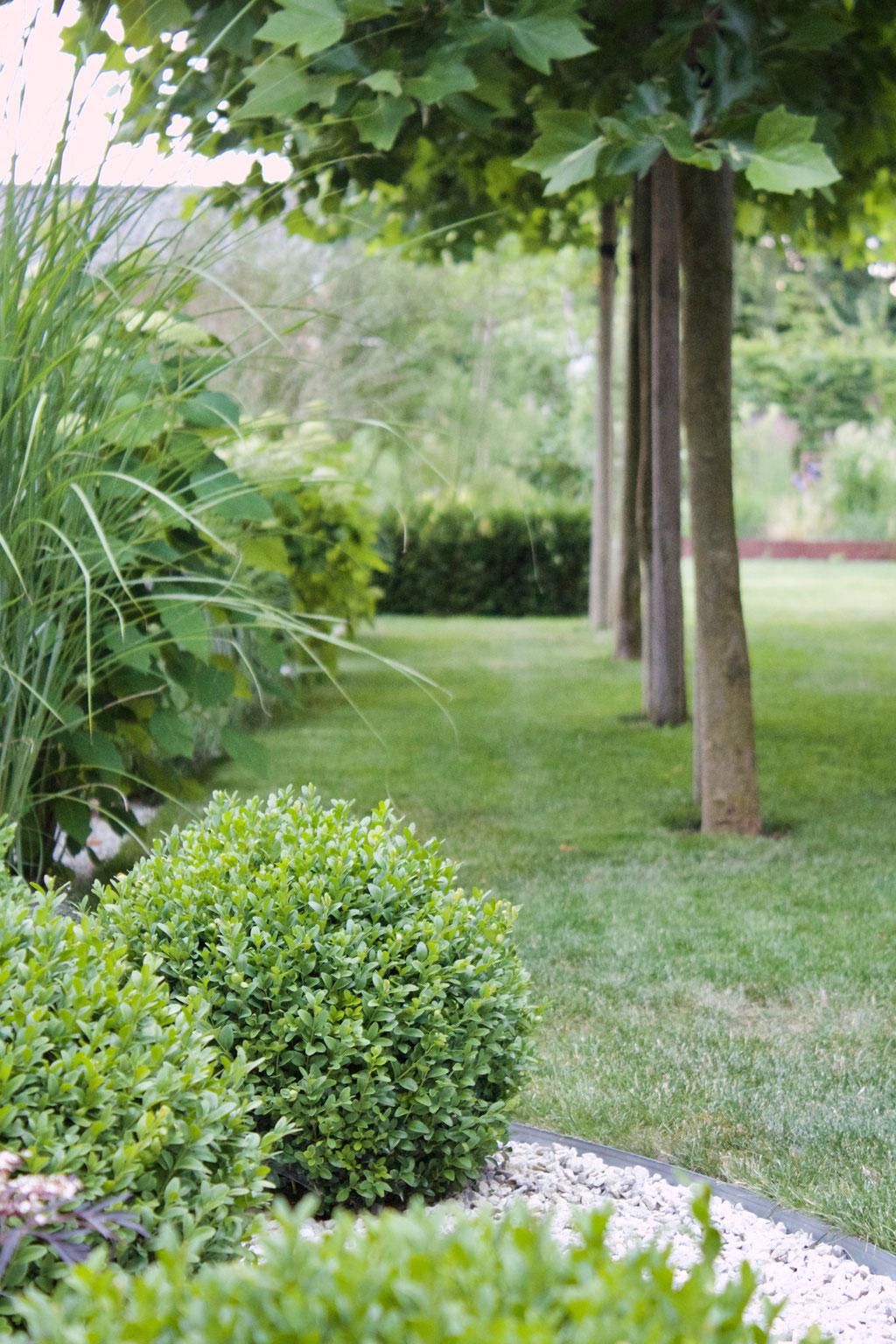 dieartigeGARTEN - Südgarten im Sommer - mit Schatten unter Platanen | Buchs, Gräser