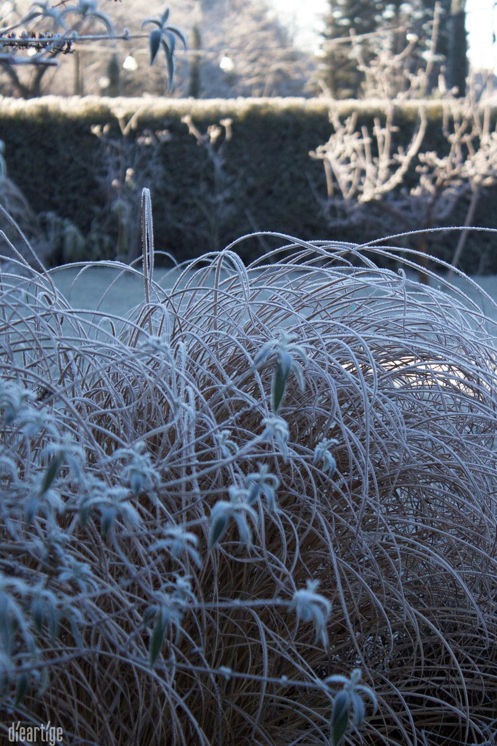 dieartigeBLOG - Wintergarten, Rauhreif + Eiskristalle, Gras + Sommerflieder