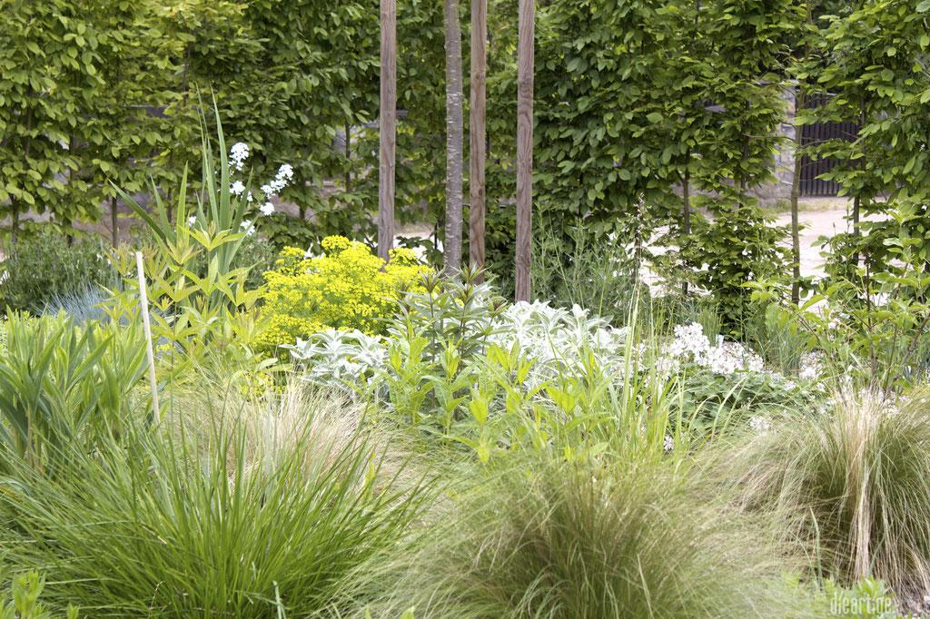 dieartigeBLOG - GARTEN // Steppengarten - Gräser, Euphorbien, Wollziest