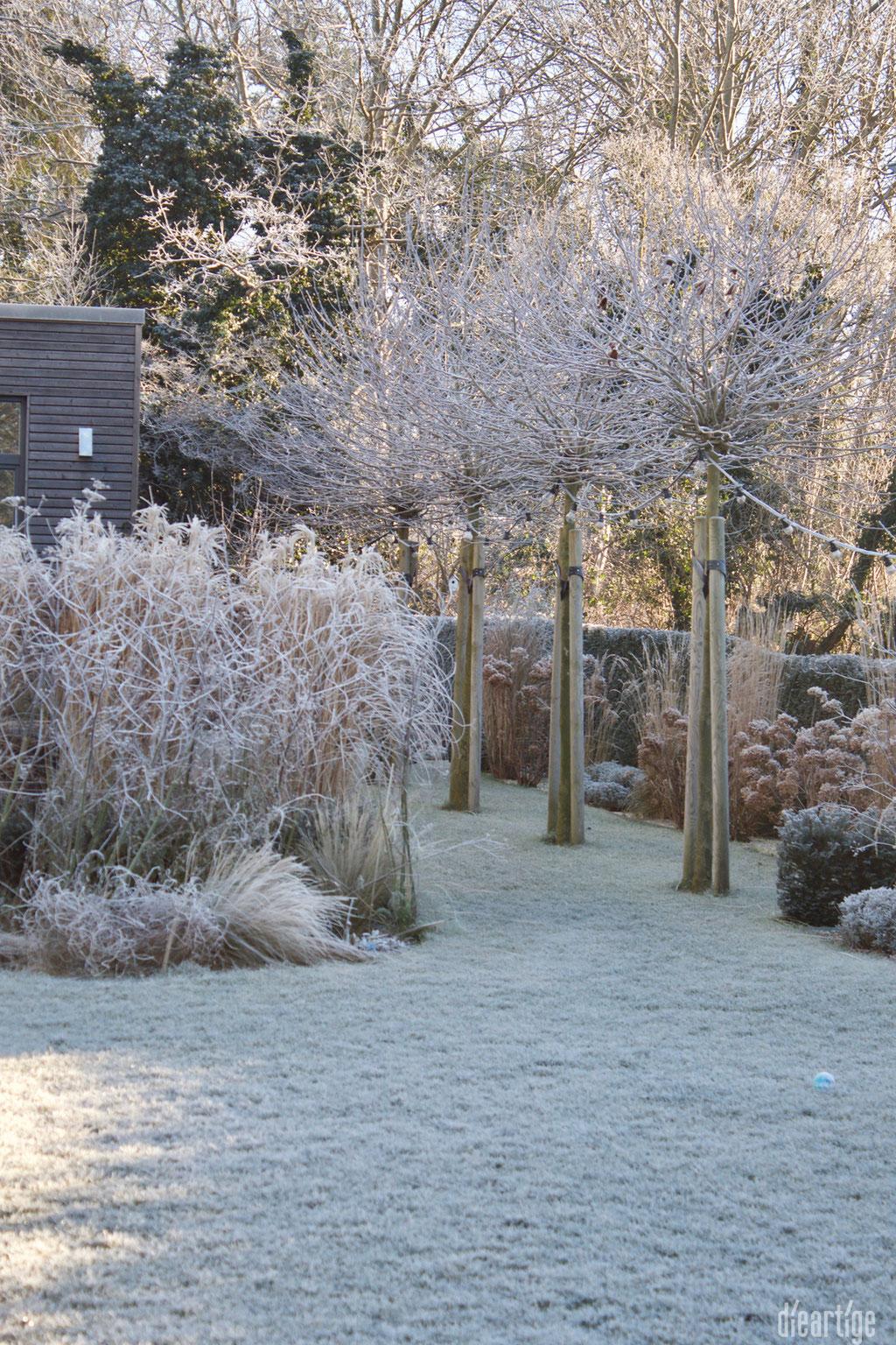 dieartigeBLOG - Wintergarten, Rauhreif + Eiskristalle, Chinaschilf, Platanen + Hortensien
