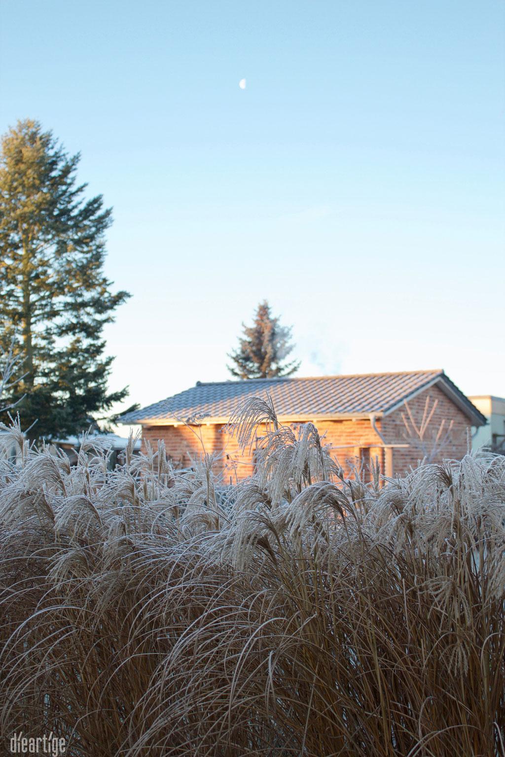 dieartigeBLOG - Wintergarten, Rauhreif + Eiskristalle, Chinaschilf