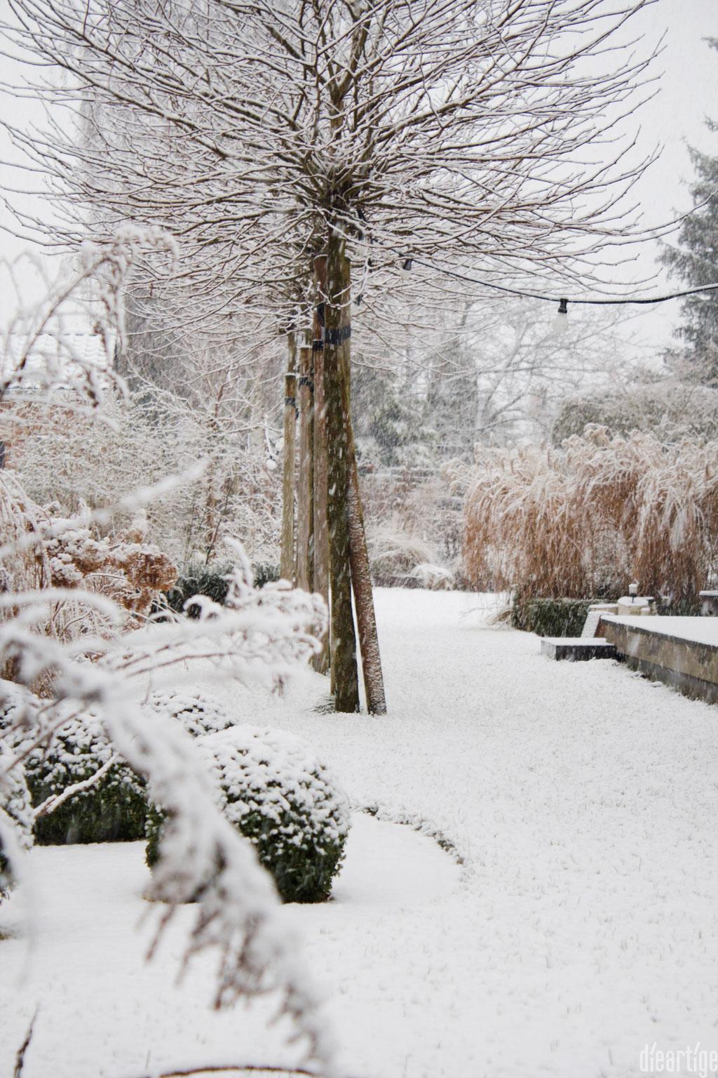 dieartigeBLOG - Schnee im Wintergarten, Platanen + Chinaschilf