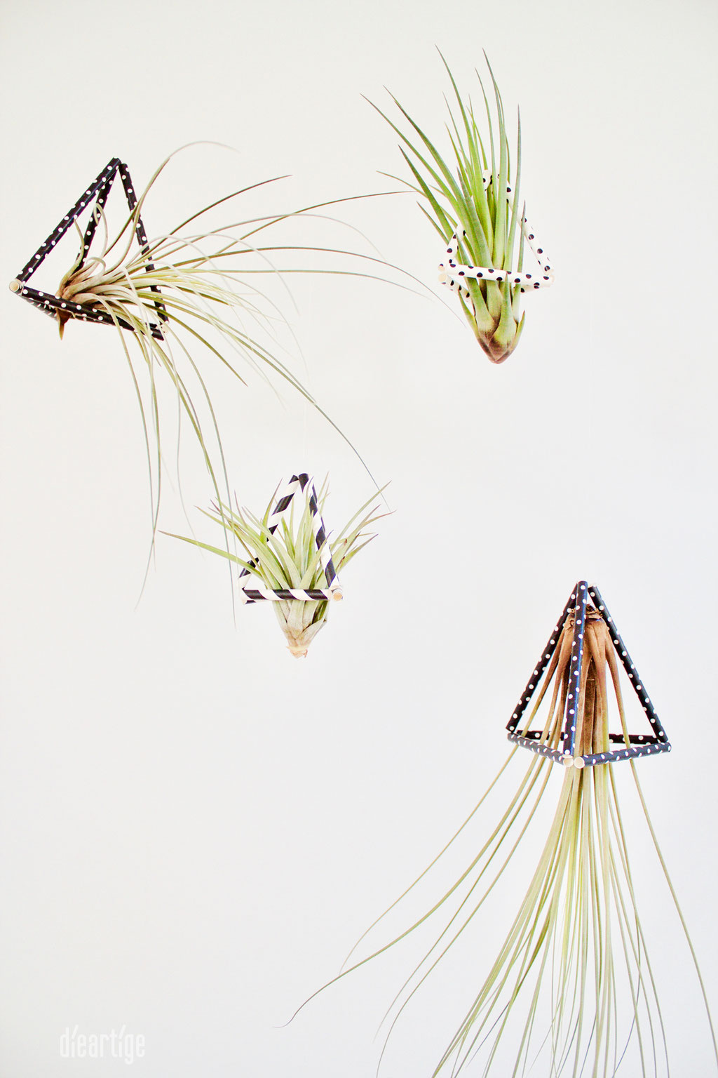 dieartigeBLOG - DIY / Tillandsien im Dreieck - Groß + Klein