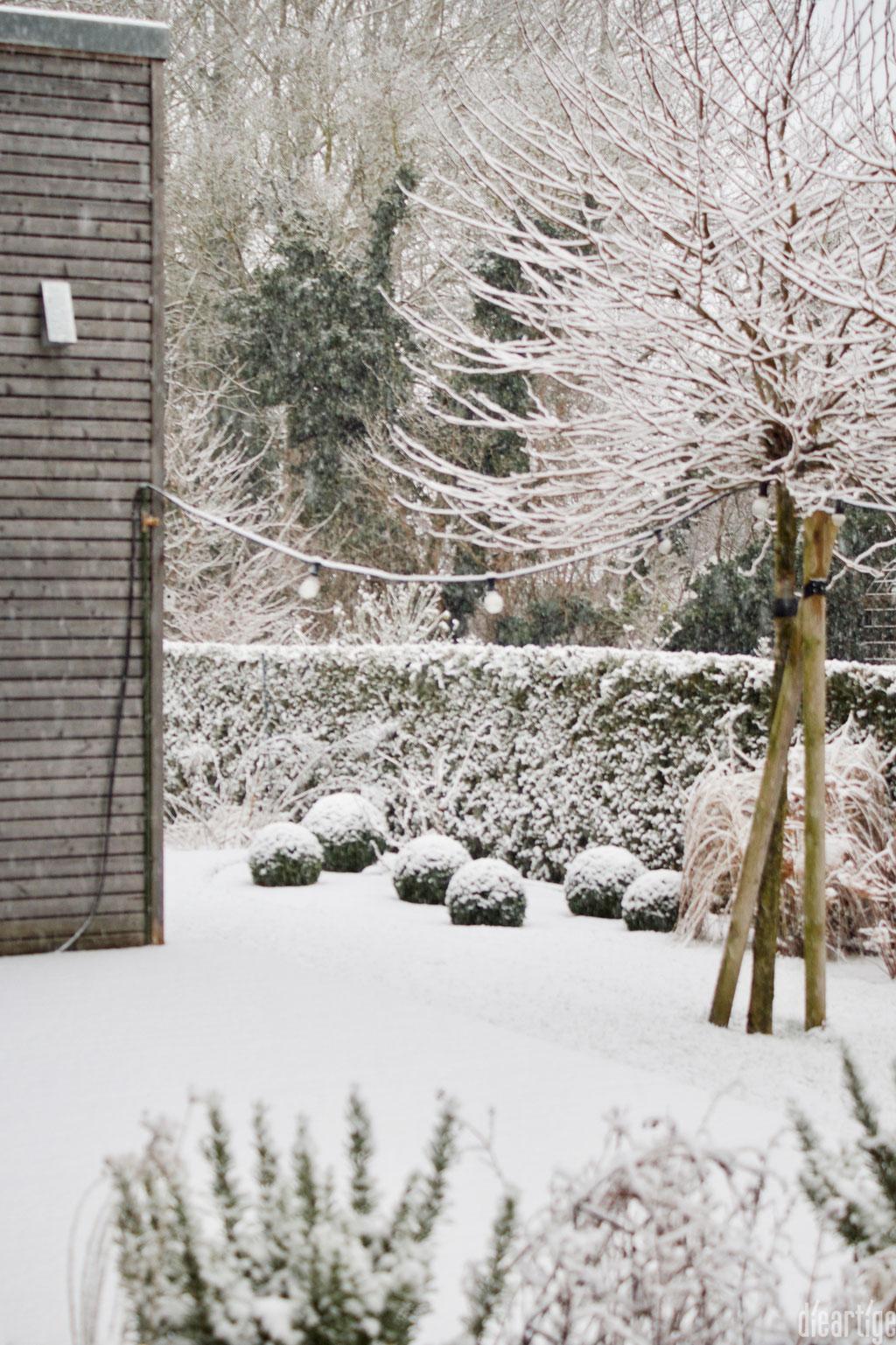 dieartigeBLOG - Schnee im Wintergarten, Platanen + Buchs