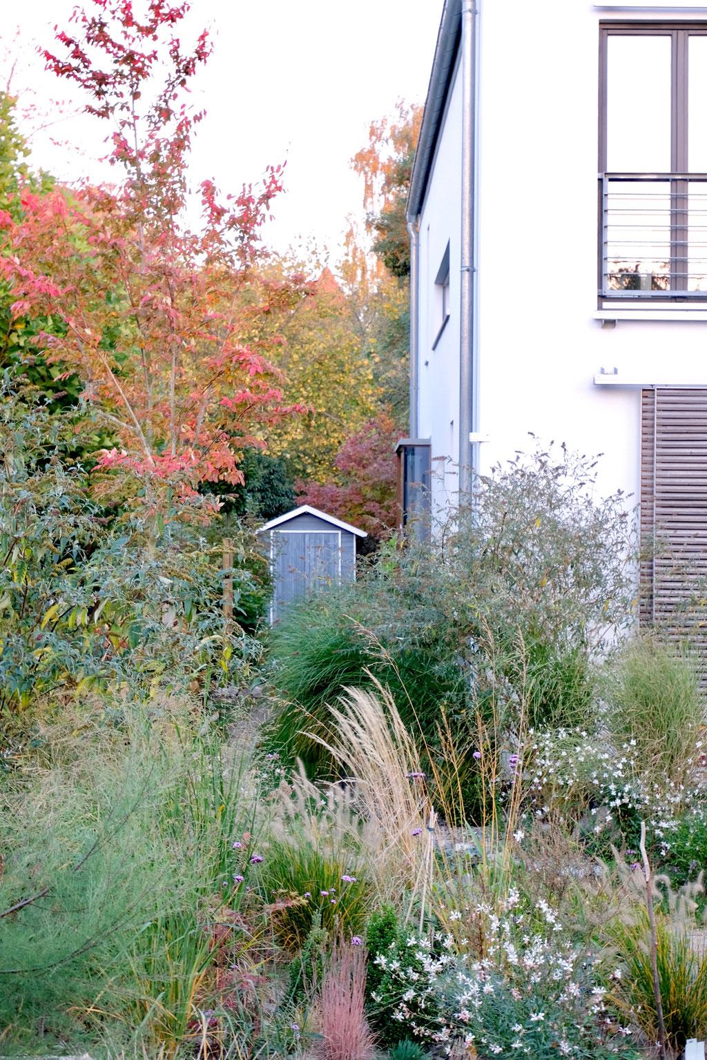 dieartigeGARTEN - Oktobergarten | Felsenbirne mit Blick die Nordseite entlang