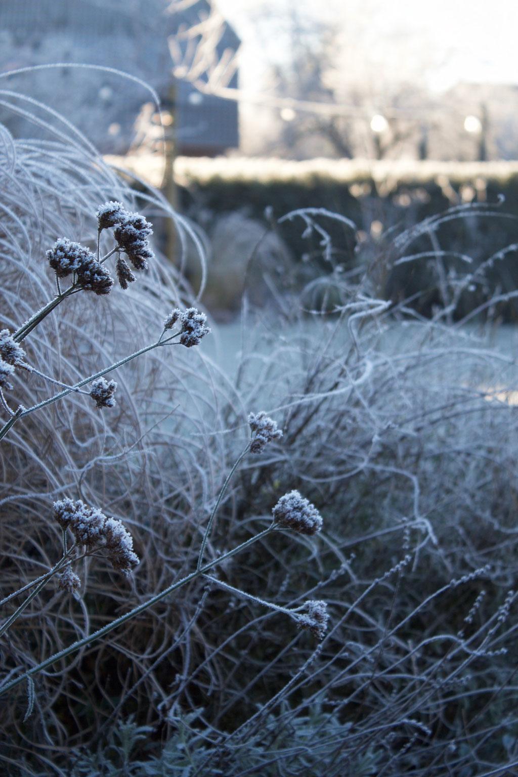 dieartigeBLOG - Wintergarten, Rauhreif + Eiskristalle, Gras + Eisenkraut