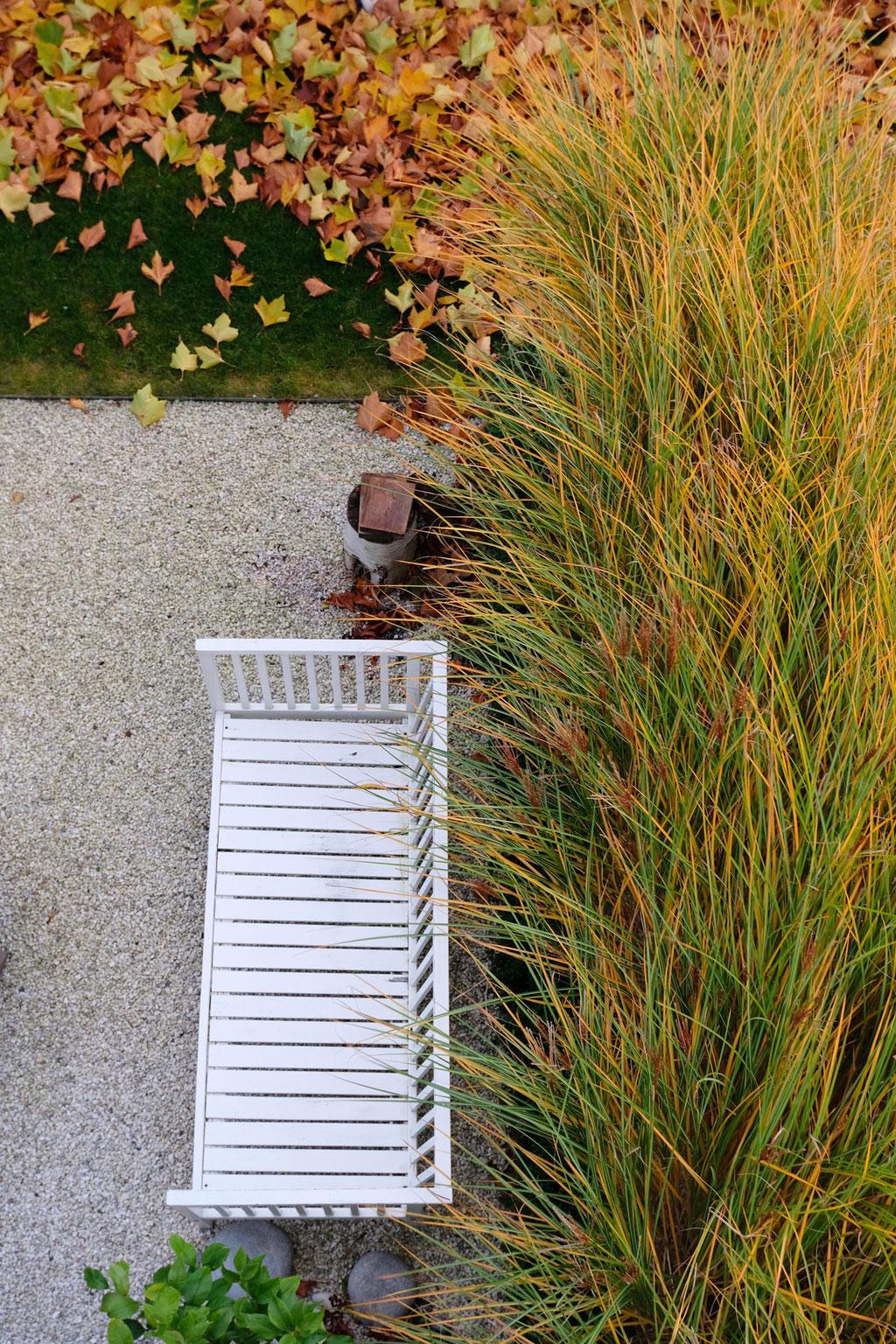 dieartigeGARTEN - Novembergarten | Platanen-Laub, Herbstlaub, goldener Herbst, Blattgold+Gartenbank+Miscanthus