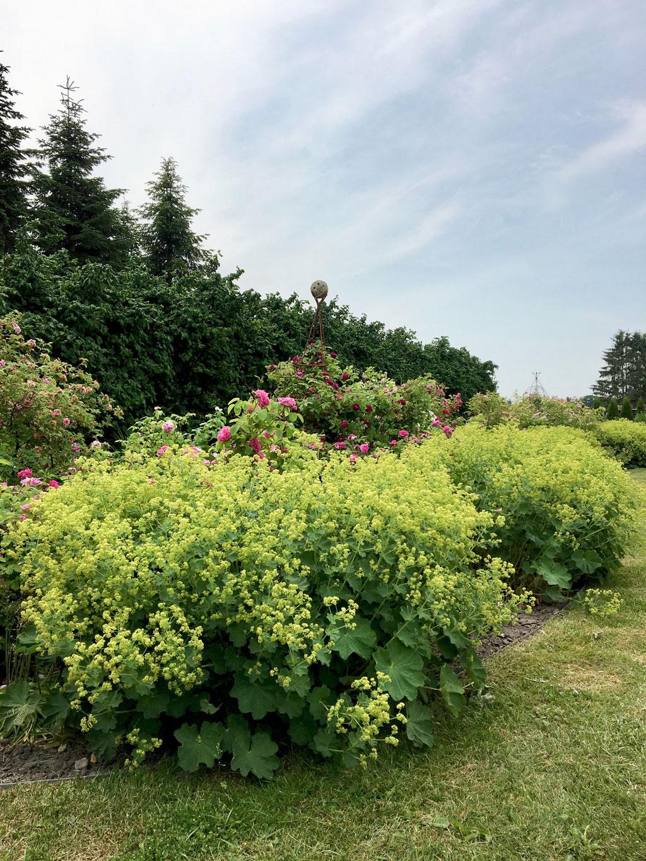dieartigeBLOG - Offene Gärten MV 2018,