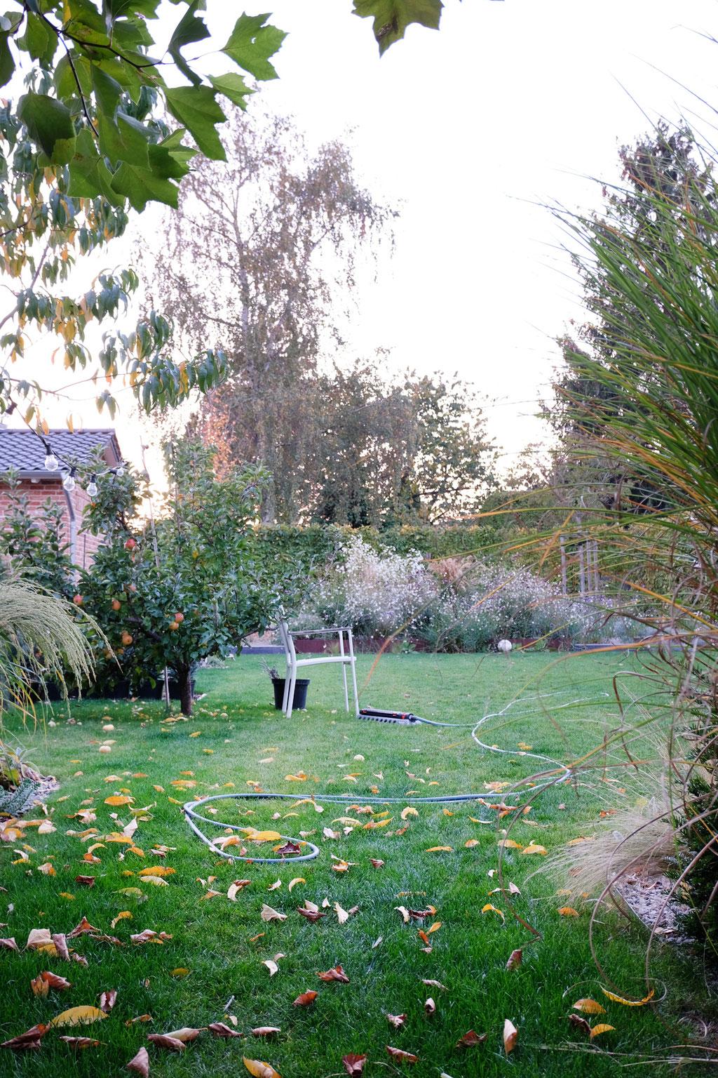 dieartigeGARTEN - Oktobergarten | Gartenblick gen Westen