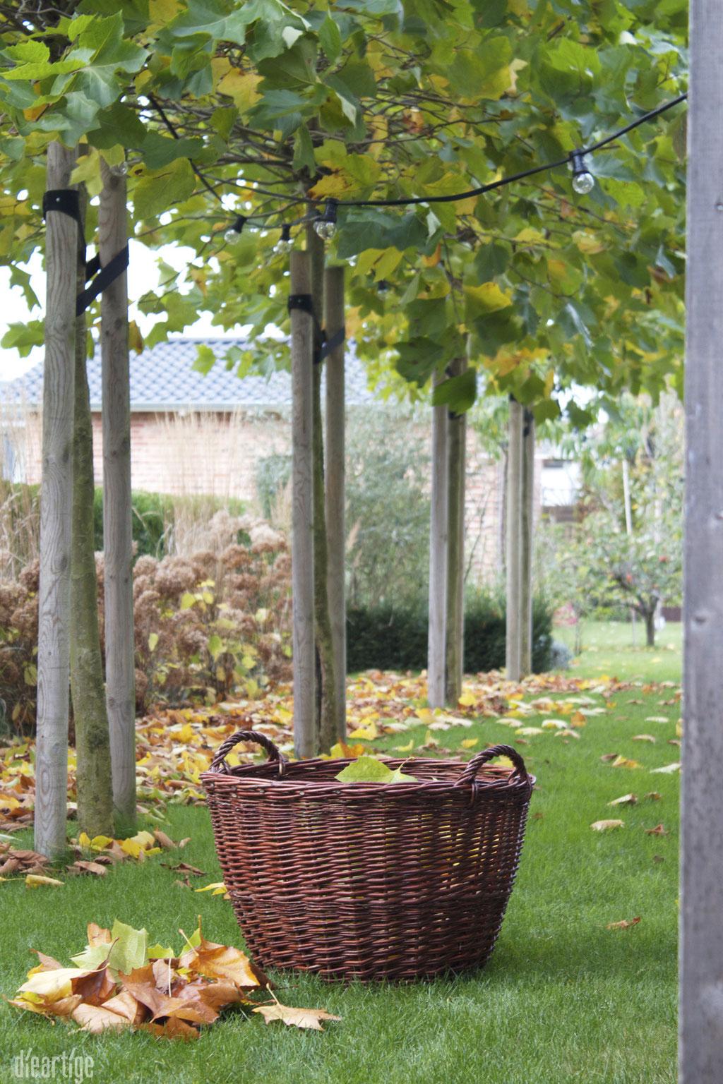 dieartigeBLOG - Kiepe+Herbstlaub = hygge