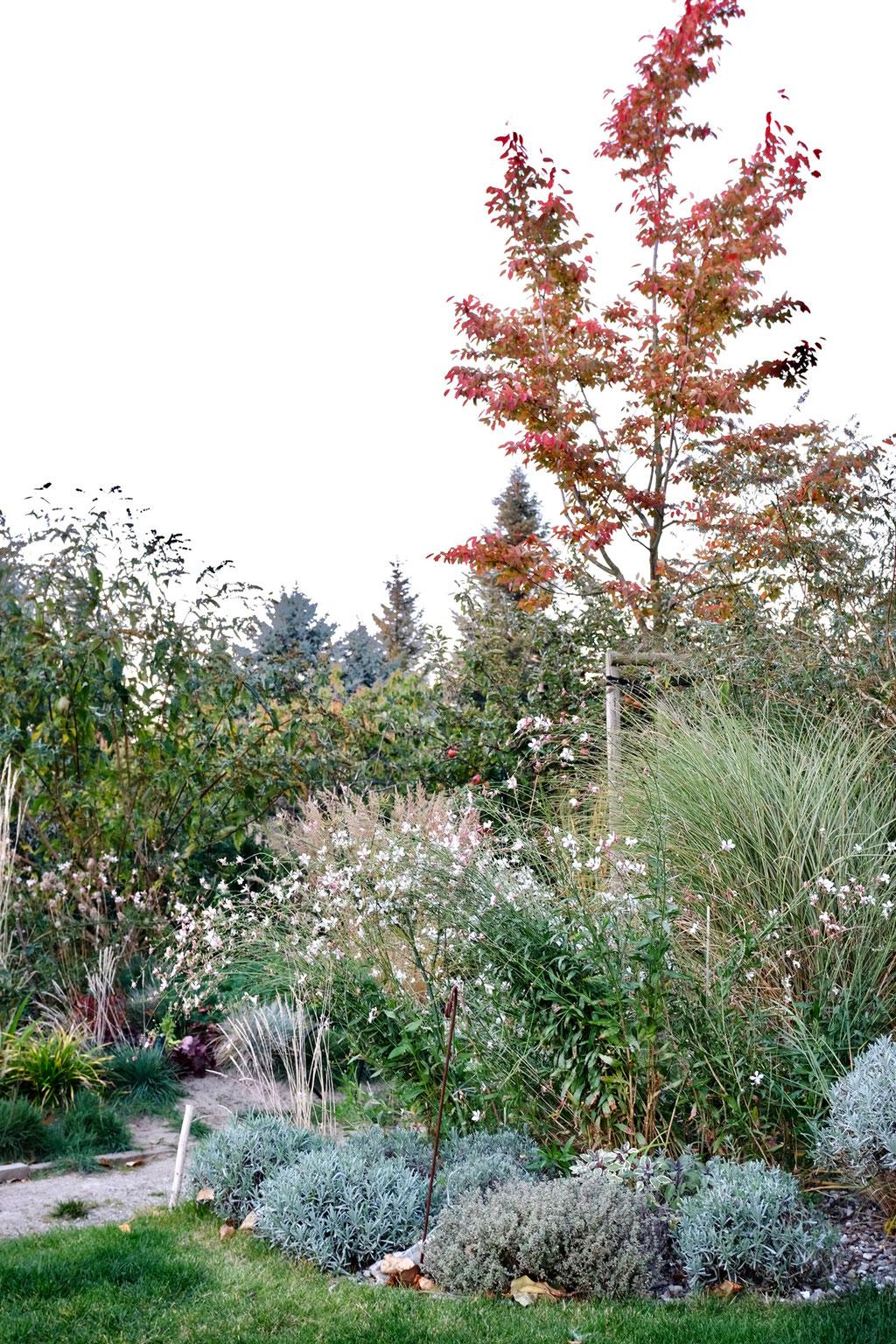 dieartigeGARTEN - Oktobergarten | Felsenbirne, Sommerflieder, Prachtkerze, Gräser, Lavendel, Thymian