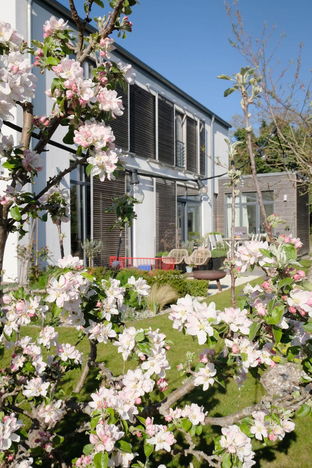dieartige - GARTEN// Apfelblüte un die Südseite