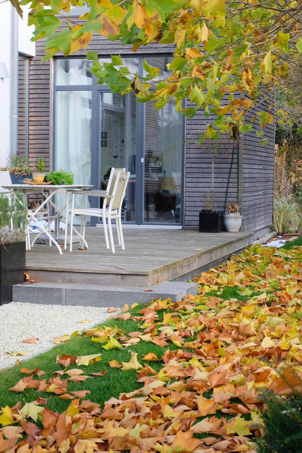 dieartigeGARTEN - Novembergarten | Platanen-Laub, Herbstlaub, goldener Herbst, Blattgold+Südterrasse+Holzfassade