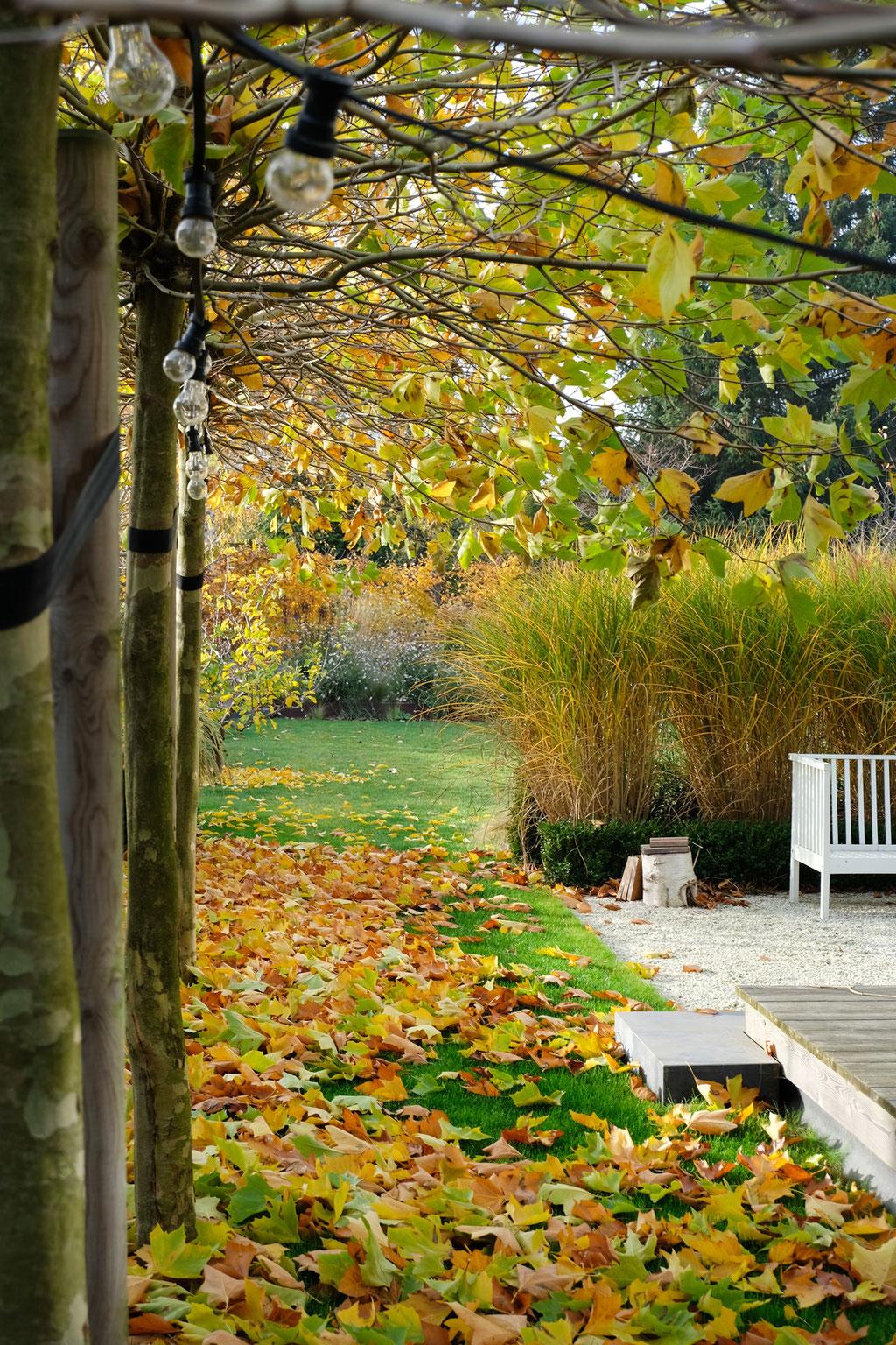 dieartigeGARTEN - Novembergarten | Platanen-Laub, Herbstlaub, goldener Herbst, Blattgold+Terrasse, Gräser