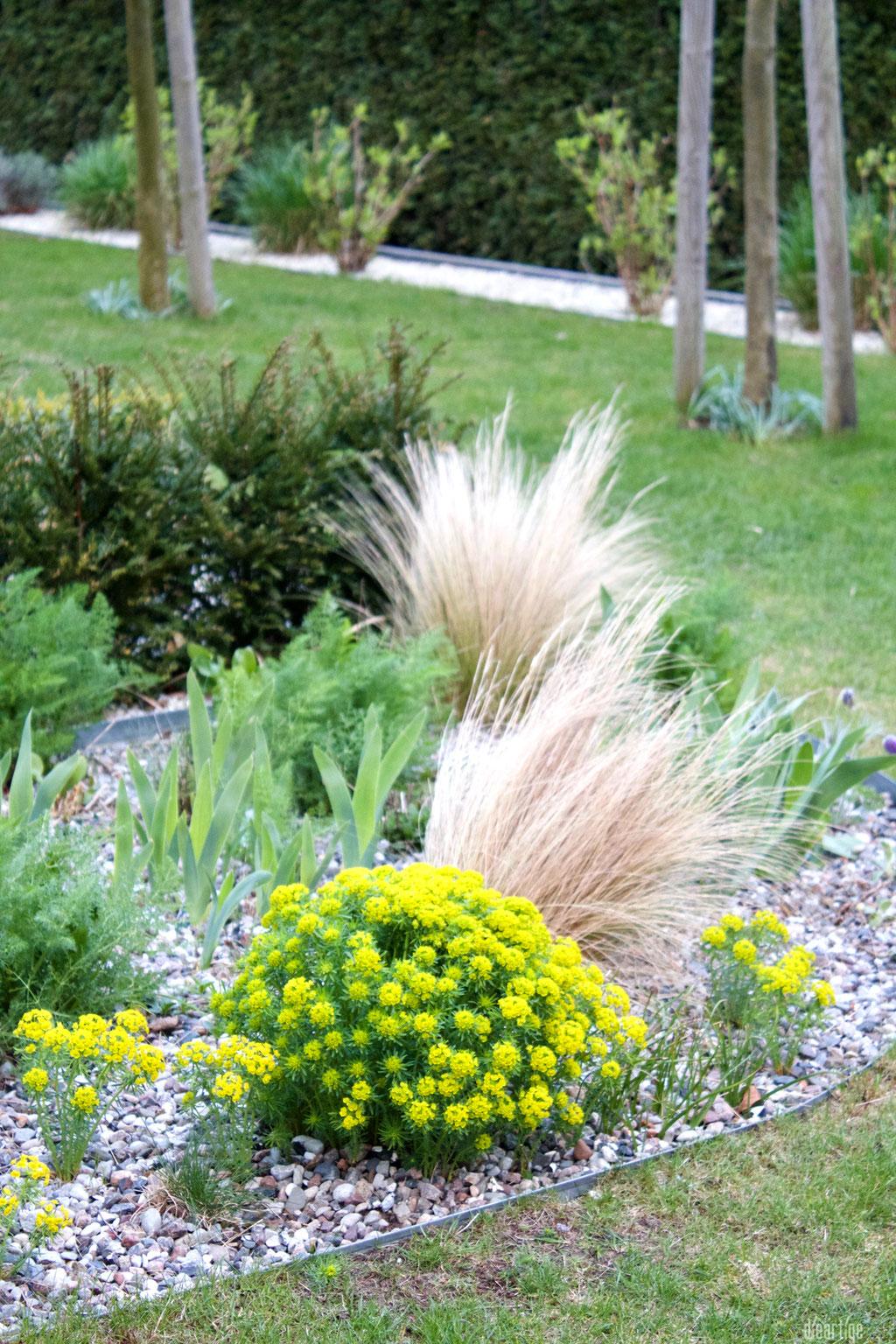 dieartigeGARTEN - Kiesgarten mit Federgras + Zypressenwolfsmilch