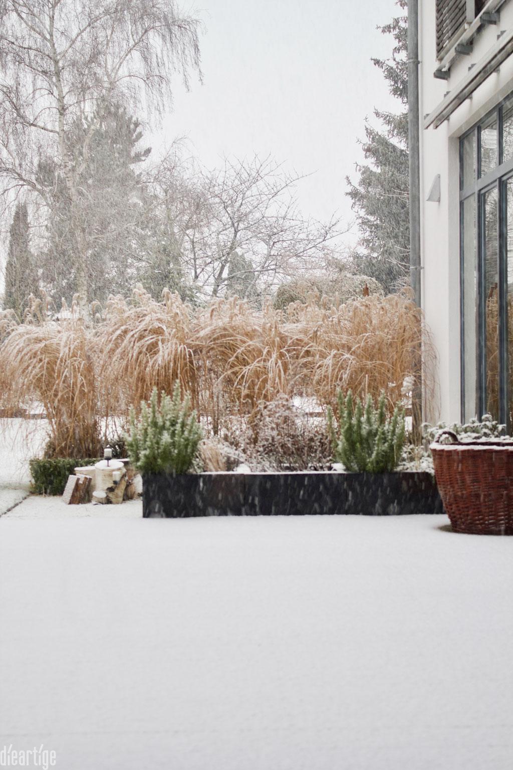 dieartigeBLOG - Schnee im Wintergarten, Chinaschilf