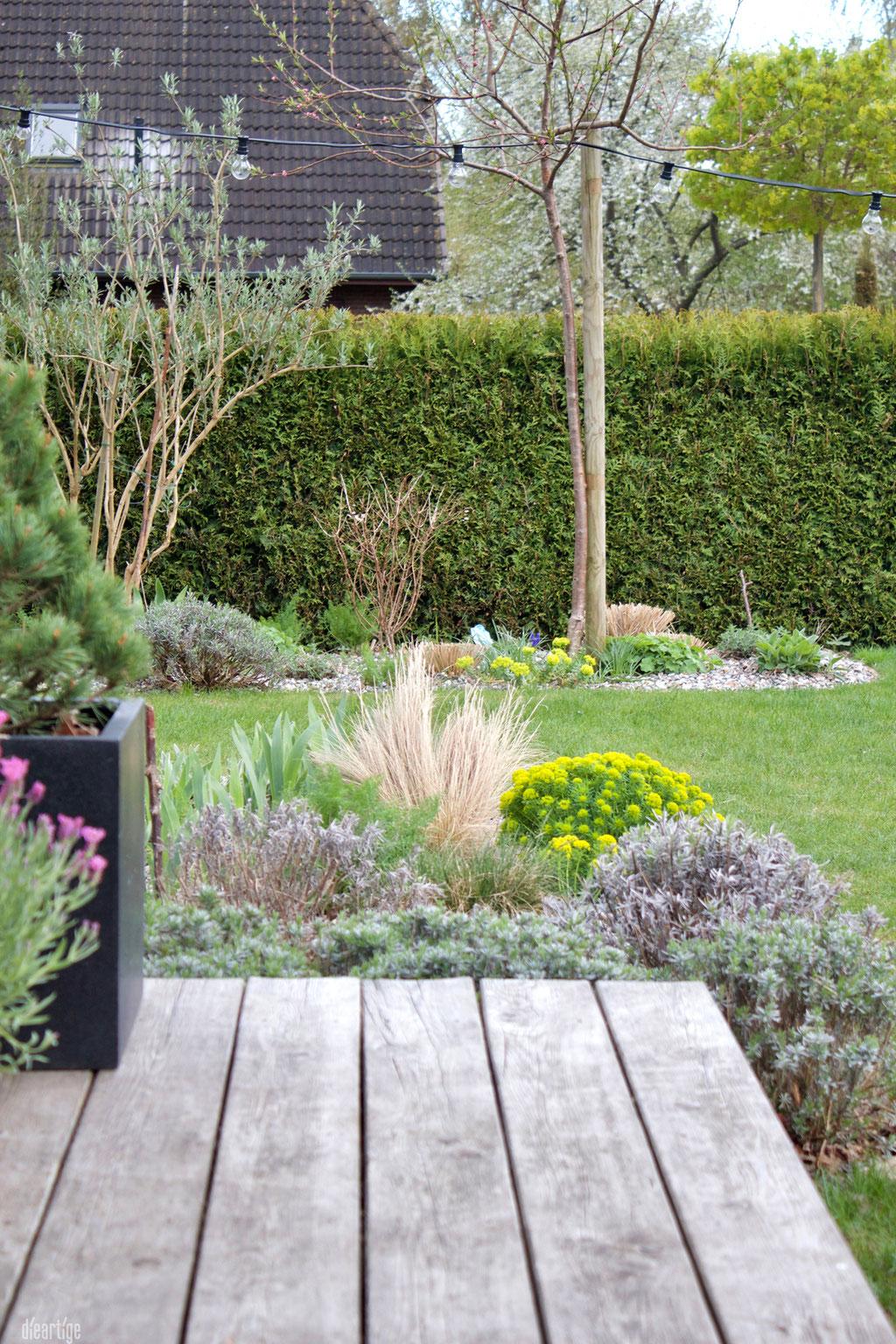 dieartigeGARTEN - Lavendel, Gräser + Steppengarten
