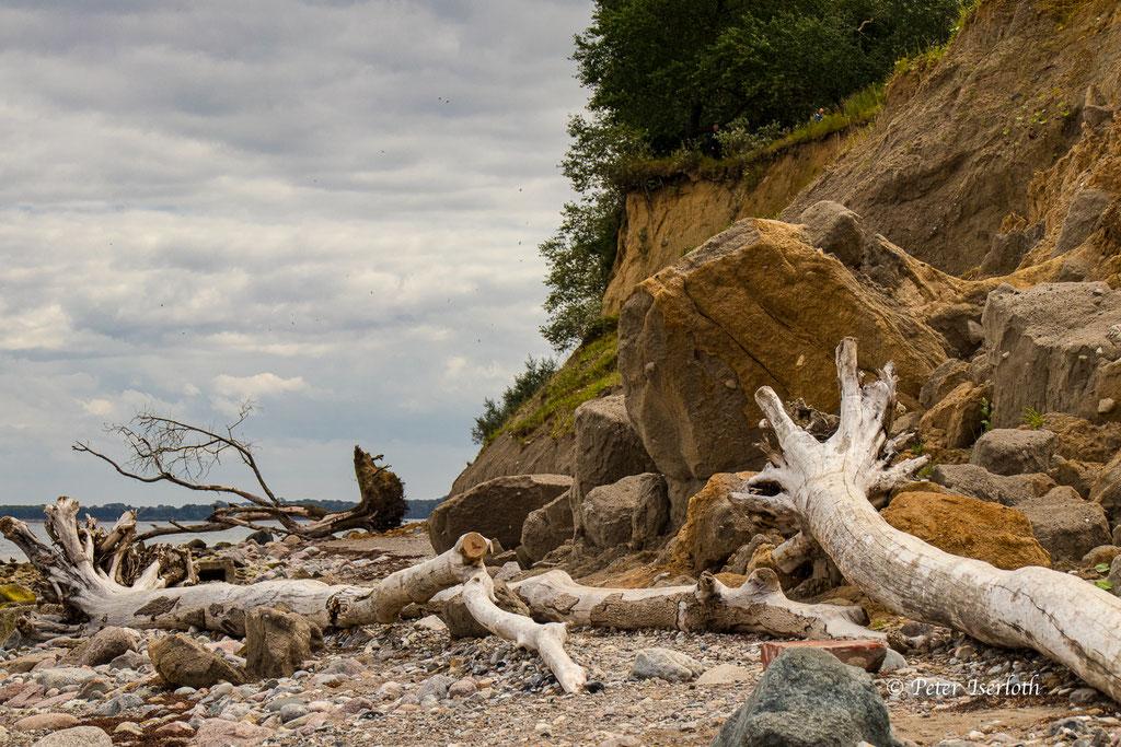 abgestürzte Bäume am Brotener Ufer bei Travemünde, Deutschland