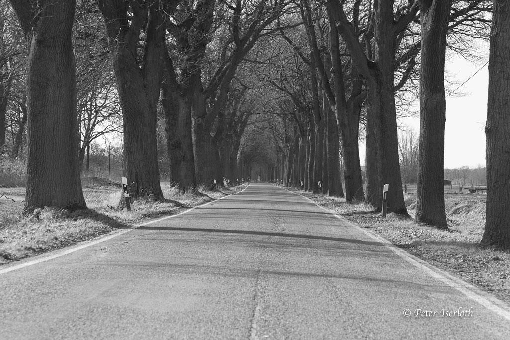 Eine Allee in Niedersachsen, Deutschland