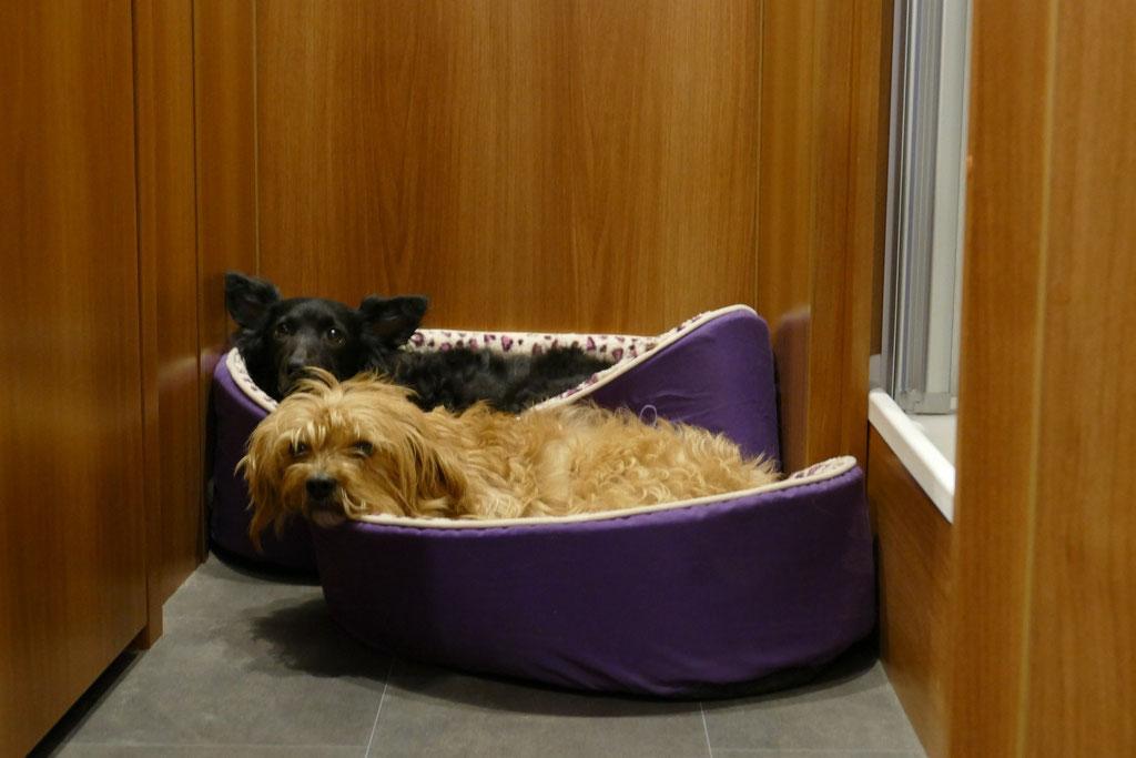 Abends im Womo. Die Hunde sind entspannt und beobachten uns