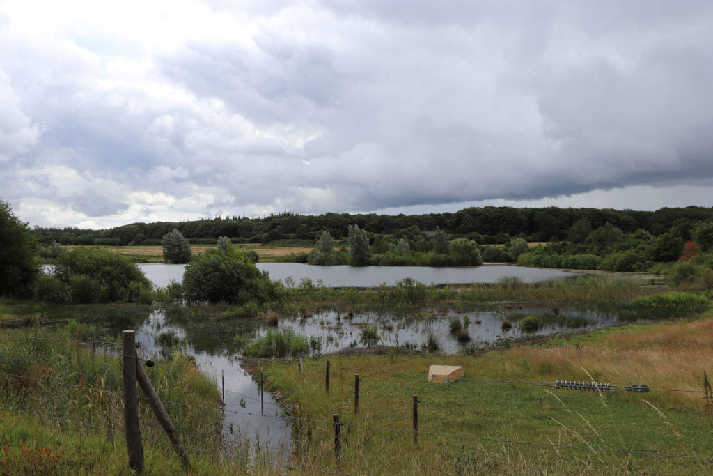 Teich am Gewerbegebiet - Foto: W.G.
